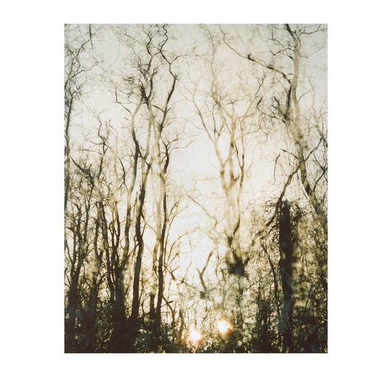 faded forest: nature photography. ethereal winter woods sunset photo. monochromatic decor. enchanted forest wall art print multiple exposure