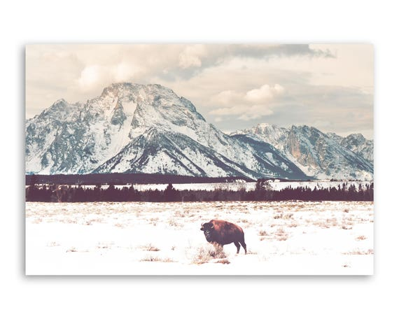 """""""Bison and Tetons"""" - photograph on canvas"""