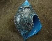 ON SALE Handmade Lampwork Glass Focal Shell Pendant by Jason Powers SRA
