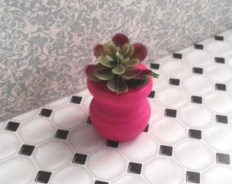 1:12 Scale 1 Potted Plant Hot Pink pot with Succulent READY to SHIP
