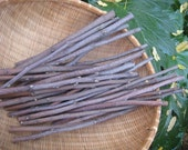 Apple Branches from My Farm, Natural Apple Wood, 30 Apple Wood Branches, Naturally Dried, Variety Lengths of 9-inches to 12-inches with Bark