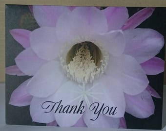 Blooming Cacti Thank You card