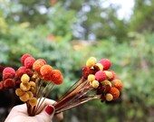 NEW colors of 25 Button flowers dried-small straw like flowers-Corsage flowers-wedding flowers-Autumn-Hot pink-fuchsia