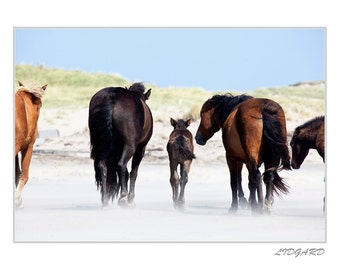 "White greeting card with photograph ""Mother, Sable Island, Nova Scotia"""