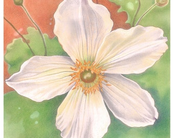 Floral Greetings Card - 'Wild Swan' Anemone