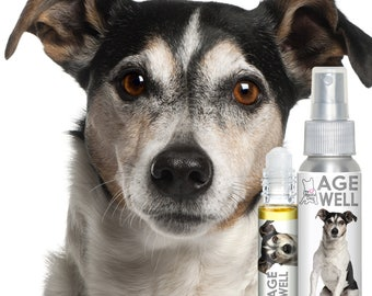 Jack Russell Parsons Terrier AGE WELL Aromatherapy Essential Oil Mental and Emotional Support for Your Senior Russell Terrier's Aging