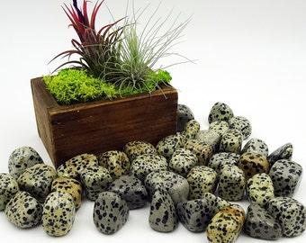 Tumbled Stones By the Ounce - DALMATIAN JASPER - (Al)