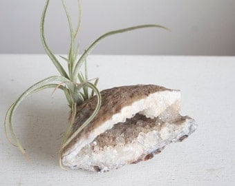 Airplant and Crystal Geode, Agate in Gray, Brown and and White, Neutral Hygge Decor, One of a Kind Gift For Him