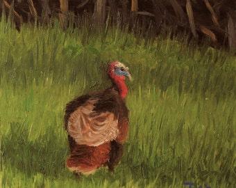 Wildlife art,  turkey painting, small oil painting, 6x6.