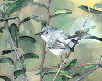 Blue-gray Gnatcatcher - Open edition print of an original watercolor (fits 11x14 frame)