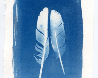 Feather cyanotype two feathers sun print fine art photography