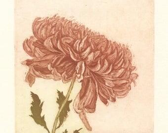 Fall Chrysanthemum, Original Color Etching