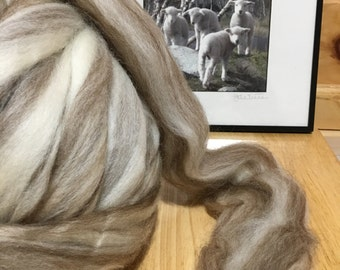 wool 4 oz Mixed BFL  SPINNING combed top , wet felting, fiber arts  natural naked undyed ashland bay