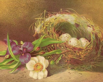 Antique Lithograph Suitable For Framing Speckled Eggs in Bird's Nest with Spring Flowers – Tender Nature Still Life Image