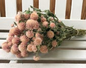 Dried pale pink Globe Amaranth Flower Bunch Wedding Flowers  Gomphrena bouquet  Natural flower bunch country Dried Flowers prim shabby chic