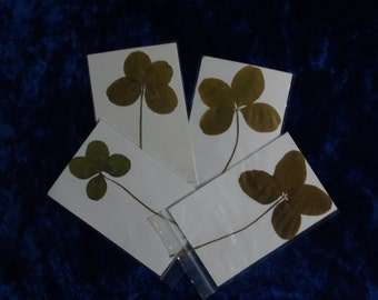 8 Real Huge 4 Leaf Clovers Craft Paint Scrabook St Patricks Day Gifts Very Large Clovers