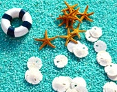 Tiny Sand Dollar and Bay Starfish ~  Approximately 1/2 Inches ~ Sea Creature ~ Beach Decor ~ Terrarium size ~ Add to Terrarium ~ One of each