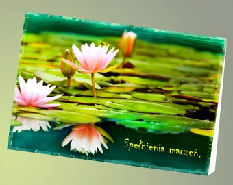 Exquisite Birthday, Name-day Card in Polish Language, Polish Inspirational Poem, Polska Kartka Imieninowa, Polska Kartka na Urodziny