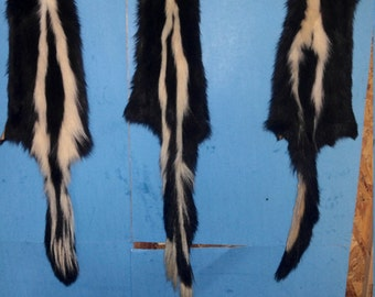 1 Skunk tanned fur pelt real animal skin hide part