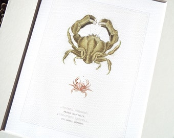 Crab Sea Life Coastal Naturalist Collection 4 Archival Print on Watercolor Paper