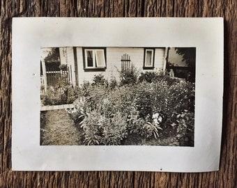 Original Vintage Photograph Backyard Botanical