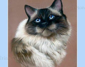 Ragdoll Cat Print Coffee and Cream by Irina Garmashova