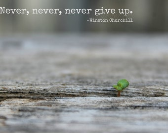 Never give up - Sprout - Print - 5X7