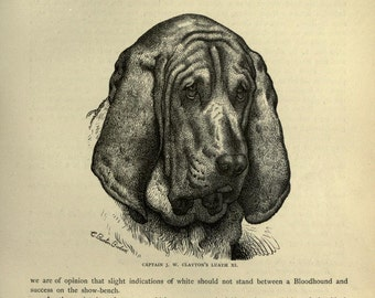 BLOOD HOUND Dog Antique Dog Print Page plate c1881 Vero Shaw Cassells Company Unique gift Christmas Thanksgiving Birthday present dog gift