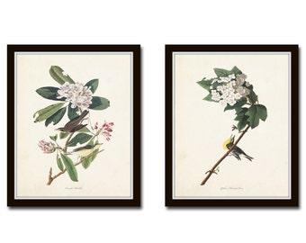 Audubon Birds Print Set No. 5, Botanical Prints, Illustration, Collage, Audubon Bird Prints, Giclee, Wall Art, Prints, Vintage Bird Prints