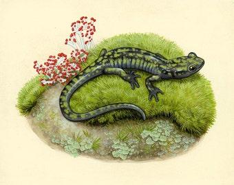 Green Salamander - 8x10 inch print by Matt Patterson, salamander print, natural history art