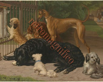 Terrier Poodle Lab Greyhound dogs image from 1800's digital download art print, for framing, collage, mixed media, altered art,