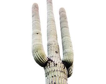 Rustic Saguaro Photo for Print