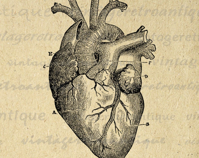 Digital Heart Diagram Graphic Printable Heart Image Medical Anatomy Artwork Antique Download Vintage Clip Art Jpg Png Eps HQ 300dpi No.118