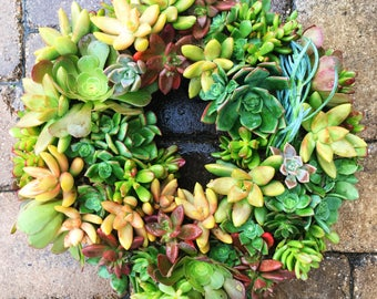 Living succulent wreath