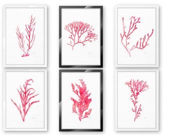 Sea Coral Decor, Wall Art Prints, Set of 6, Sea Life, Beach House Decor, Bathroom Art, Nautical Home Decor, Coastal Wall Decor, Beach Art