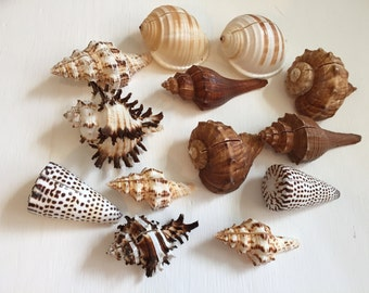 Assorted Sea Shell Place Card Holders (10pc) - Beach Wedding Decoration - Coastal Decor