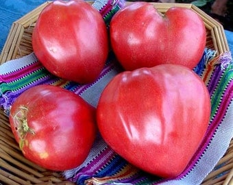VTHO) OXHEART TOMATO~Seeds!!!!~~~~~~~~My Favorite Heirloom!!