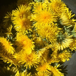 Dried dandelion flowers • dandelion flower tea • dandelion flower wine • dandelion salve etc