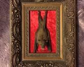 Taxidermy bat in antique frame