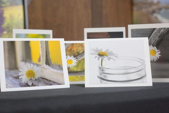 Assorted Boxed Set of Daisy Cards! Gift Bag Included