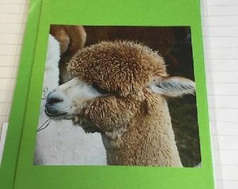 Alpaca Hand Made Greeting Cards