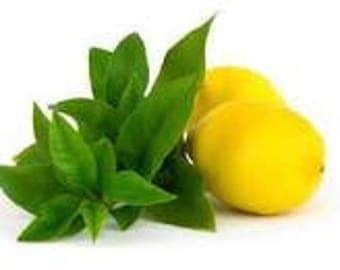 Lemon Verbena - Coming Soon