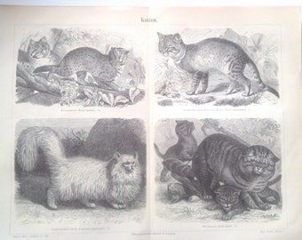 "Lithography, ""Cats""."