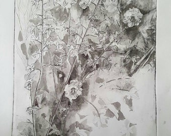 Black and white etching of a Hollyhock bush with watercolour detail.