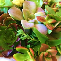 succulentwonders