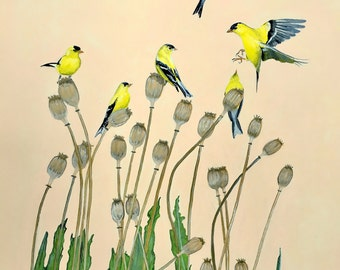 American Goldfinches on dried poppies
