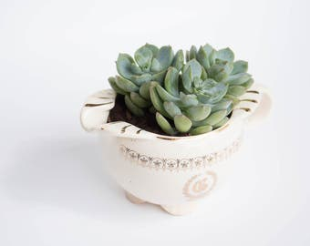 Vintage Teacup Succulent Vessel White Succulent with Pot One of a Kind