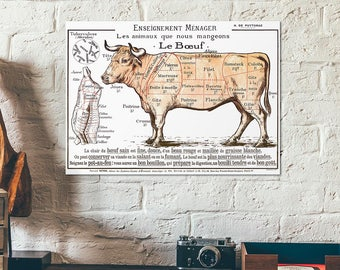Le boeuf beef cuts - Old vintage meat cut scheme - slaughterhouse butchery educational charts