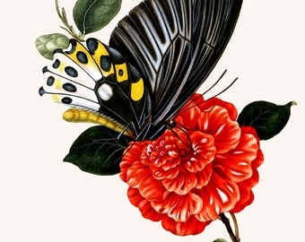 An Epitome of the Natural History of the Insects of India c1800.  Plate 16