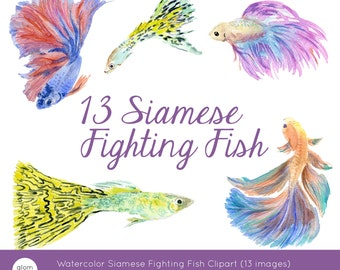 13 Watercolor Fish including Siamese Fighting Fish (Betta) and Guppy (Millionfish, Rainbow fish) Clipart